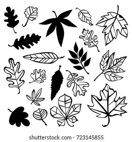 Autumn leaves. Isolated vector objects on white background.