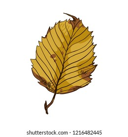 Autumn leaves. Natural, seasonal, autumn leaves. Beautiful leaf of hardwood hornbeam, tree with dense crown. Decorative garden and park decorations, topiary construction. Vector illustration.