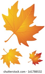 Autumn leaves realistic vector illustration