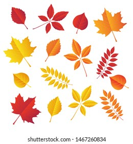 autumn leaves set, isolated on white background. simple cartoon flat style. Vector illustration