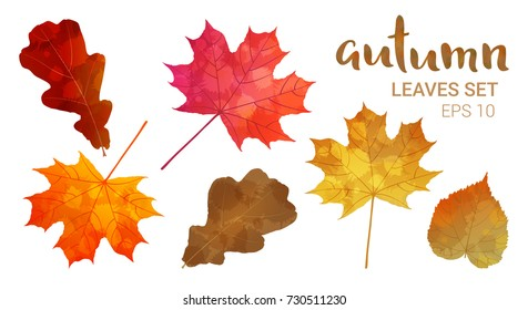 Autumn leaves set, isolated on white background. Leaves with watercolor texture, vector illustration. Good for social media, promotional materials, ads, email marketing.