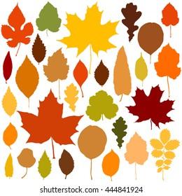 Autumn leaves set  on white background vector