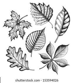 Autumn leaves set in a sketch style. Vector illustration isolated on white background.
