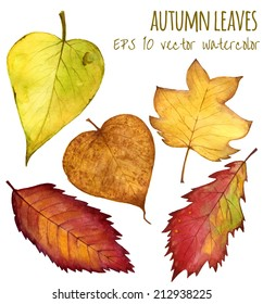 autumn leaves a watercolor on a white background. vector illustration