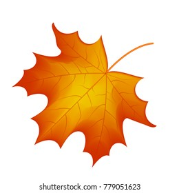 autumn maple leaf vector on a white background