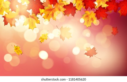 Autumn maple leaves with beautiful sunlight background. Vector illustration.