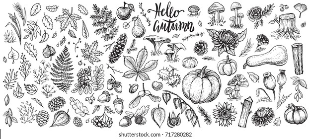 Autumn nature vector sketches. Hand drawn set of forest plants, leaves, branches, mushrooms, cones, herbs, rowan, pumpkins, seasonal flowers and other harvest. Black line isolated illustrations.