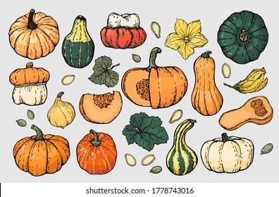 Autumn pumpkin sketch set. A set of different types of pumpkins, pumpkin leaves, seeds and flowers. Drawn color illustrations with a black outline, vector.