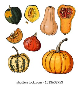 Autumn pumpkins. Sketch of food. Acorn Squash,  Vector drawing of vegetables and herbs.