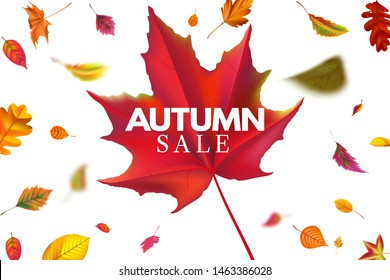 Autumn sale banner. Season sales template with falling leaves, fallen leaf discount and autumnal flyer. Seasonal autumns foliage promotion special price label background vector illustration