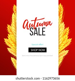 Autumn sale banner with wheat ears, dried whole grains clearance template. Seasonal fall design element, colorful vector illustration for social media, shop, web, mobile, logo, banner, poster, promo