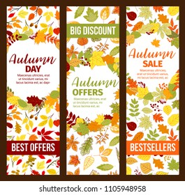 Autumn sale banners set for fall discount promo. Vector seasonal shopping bestsellers offer design of maple or chestnut and poplar leaf pattern, oak acorn or rowan berry and autumn birch foliage