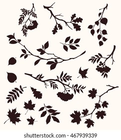 Autumn set of twig and leaf silhouettes. Decorative tree branches. Oak, maple, rowan and birch