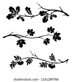 Autumn twigs of oak, rowan and maple silhouette. Vector illustration