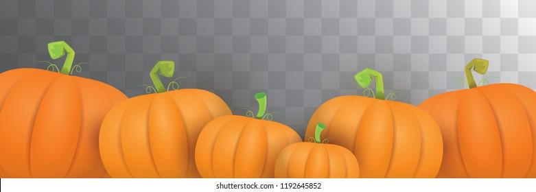 autumn vector orange pumpkins horizontal banner design template for farm market banner and thanksgiving day background. vector Pile of orange pumpkin frame or border isolated on transparent background