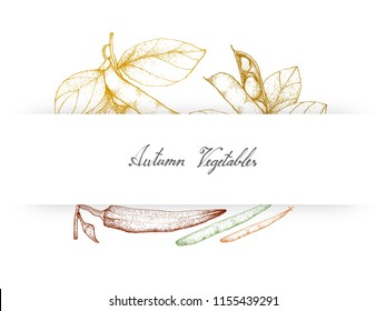 Autumn Vegetables, Illustration of Hand Drawn Sketch Fresh Fava Bean or Broad Beans, Green Beans or Phaseolus Vulgaris and Okra or Lady Finger Fruits.
