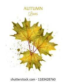 Autumn watercolor leaves Vector isolated on white background. Fall banner template. Golden colors