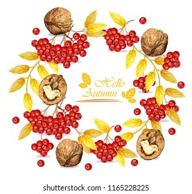 Autumn wreath walnuts and mountain ash Vector realistic. Fall roudn decoration