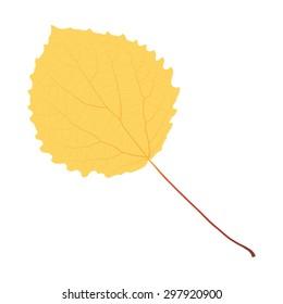 autumn yellow leaf aspen