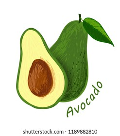 Avocado, fruit doodle drawings vector illustration