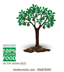 Avocado, fruits vector illustration.