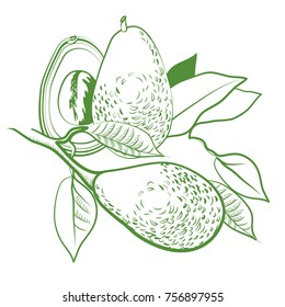 avocado, avocado halves with stone, fruit lies in leaves, fruits and leaves, fruit, food, natural, natural, tropical, green, illustration, graphic, vector