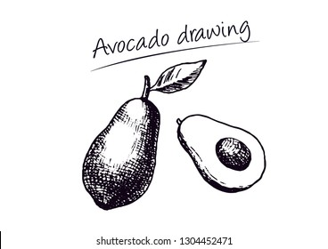 Avocado hand drawing