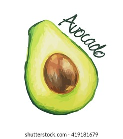 Avocado. Hand drawn watercolor painting. Vector illustration.
