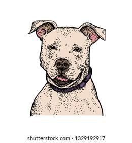 awesome dog pitbull