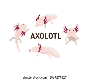 Axolotl in different poses. Set of vector illustrations in flat style. Isolated on white background.