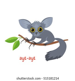 Aye-aye from Madagascar in cartoon style. Vector illustration of wild animal isolated on white background. Cute zoo alphabet.
