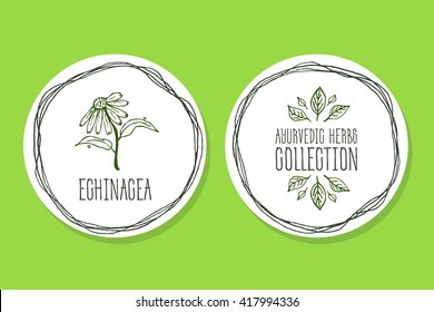 Ayurvedic Herb Collection. Handdrawn Illustration - Health and Nature Set. Natural Supplements. Ayurvedic Herb Label with Echinacea