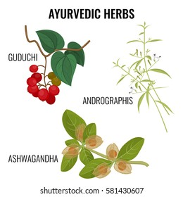 Ayurvedic herbs collection isolated on white. Ashwagandha or withania somnifera, guduchi tinospora cordifolia, Andrographis flowering plant realistic vector illustration