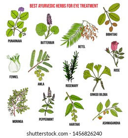 Ayurvedic herbs for eye treatment, natural botanical set. Hand drawn vector illustration