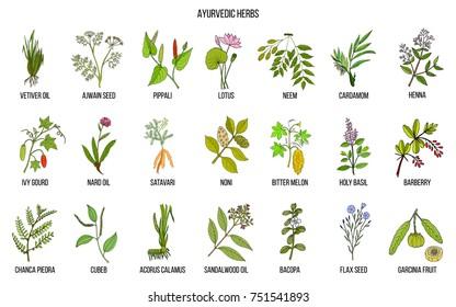 Ayurvedic herbs, natural botanical set. Hand drawn vector illustration