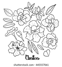 Azalea leaves and flowers collection. Vector graphic floral decorations isolated on white background. Coloring book page design for adults and kids