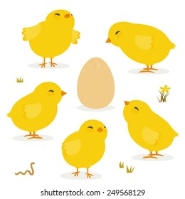 Baby chickens and Egg isolated on white icon set. Layered vector file, for easy manipulation.