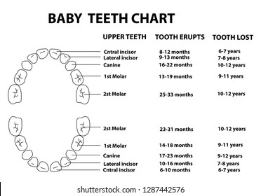 BABY (DECIDUOUS) TEETH CHART