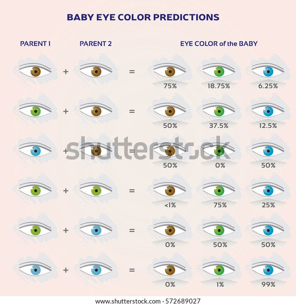 Baby Eye Color Prediction Chart Icons Stock Vector (Royalty