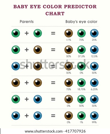 Baby Eye Color Predictor Chart Template Stock Vector Royalty Free