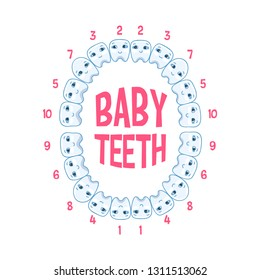 Baby teeth in a child, teeth infographics. Vector illustration of pediatric dentistry