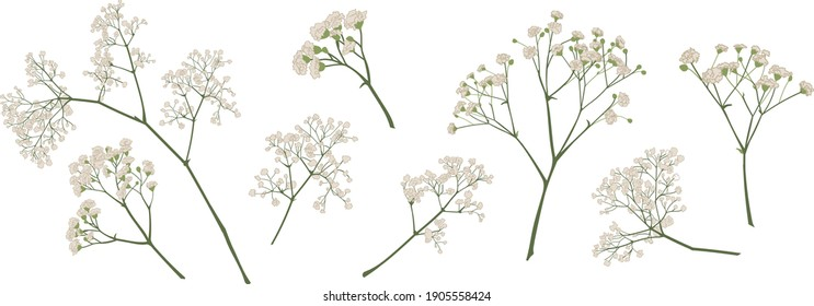 baby's breath flower, gypsophila hand drawn, isolated vector illustration set. coloured. Invitations, gift card, wedding, greetings, anniversary decorations. Bouquet element. Green, ivory, beige