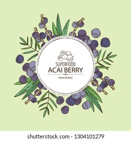 Background with acai berries and acai palm. Super food. Vector hand drawn illustration.