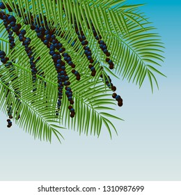 Background with acai berries and acai palm. Superfood.