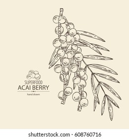 Background with acai berries and acai palm. Superfood. Hand drawn