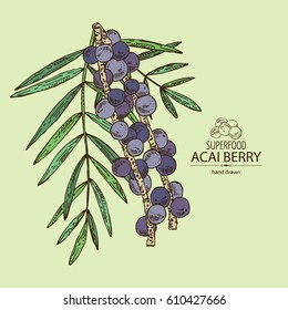 Background with acai berries and acai palm. Superfood. Hand drawn.