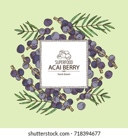 Background with acai berries and acai palm. Superfood. Vector hand drawn illustration