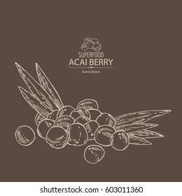 Background with acai berries. Superfood. Hand drawn