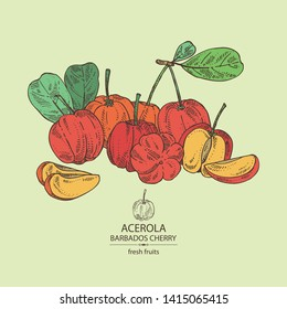 Background with acerola: fruit, leaves and acerola slice. Barbados cherry. Vector hand drawn illustration.