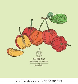 Background with acerola: fruit, leaves and acerola slice. Barbados cherry. Vector hand drawn illustration
